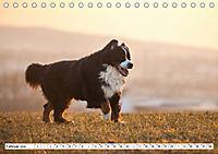 Ein Herz auf 4 Pfoten - Berner Sennenhund (Tischkalender 2019 DIN A5 quer) - Produktdetailbild 2