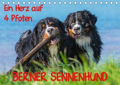 Ein Herz auf 4 Pfoten - Berner Sennenhund (Tischkalender 2019 DIN A5 quer), Sigrid Starick