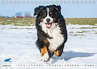 Ein Herz auf 4 Pfoten - Berner Sennenhund (Tischkalender 2019 DIN A5 quer) - Produktdetailbild 1