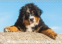 Ein Herz auf 4 Pfoten - Berner Sennenhund (Tischkalender 2019 DIN A5 quer) - Produktdetailbild 8