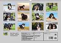 Ein Herz auf 4 Pfoten - Berner Sennenhund (Wandkalender 2019 DIN A3 quer) - Produktdetailbild 13