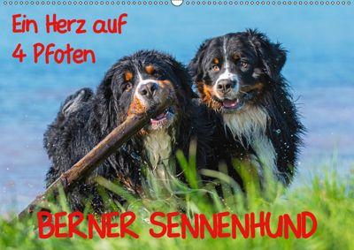 Ein Herz auf 4 Pfoten - Berner Sennenhund (Wandkalender 2019 DIN A2 quer), Sigrid Starick