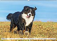 Ein Herz auf 4 Pfoten - Berner Sennenhund (Wandkalender 2019 DIN A2 quer) - Produktdetailbild 10