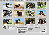 Ein Herz auf 4 Pfoten - Berner Sennenhund (Wandkalender 2019 DIN A2 quer) - Produktdetailbild 13