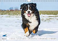 Ein Herz auf 4 Pfoten - Berner Sennenhund (Wandkalender 2019 DIN A4 quer) - Produktdetailbild 1