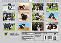 Ein Herz auf 4 Pfoten - Berner Sennenhund (Wandkalender 2019 DIN A4 quer) - Produktdetailbild 13