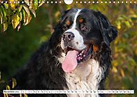 Ein Herz auf 4 Pfoten - Berner Sennenhund (Wandkalender 2019 DIN A4 quer) - Produktdetailbild 11