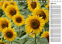 Ein Jahr lang Sonnenblumen (Tischkalender 2019 DIN A5 quer) - Produktdetailbild 4