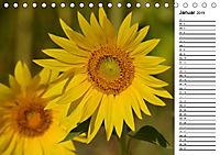 Ein Jahr lang Sonnenblumen (Tischkalender 2019 DIN A5 quer) - Produktdetailbild 1