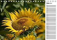 Ein Jahr lang Sonnenblumen (Tischkalender 2019 DIN A5 quer) - Produktdetailbild 3
