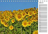 Ein Jahr lang Sonnenblumen (Tischkalender 2019 DIN A5 quer) - Produktdetailbild 6