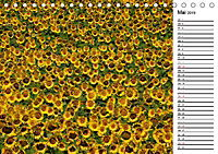 Ein Jahr lang Sonnenblumen (Tischkalender 2019 DIN A5 quer) - Produktdetailbild 5