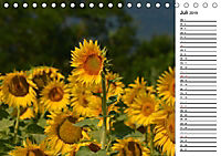 Ein Jahr lang Sonnenblumen (Tischkalender 2019 DIN A5 quer) - Produktdetailbild 7