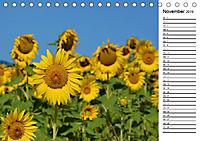 Ein Jahr lang Sonnenblumen (Tischkalender 2019 DIN A5 quer) - Produktdetailbild 11