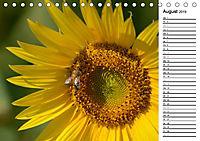 Ein Jahr lang Sonnenblumen (Tischkalender 2019 DIN A5 quer) - Produktdetailbild 8