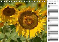 Ein Jahr lang Sonnenblumen (Tischkalender 2019 DIN A5 quer) - Produktdetailbild 10