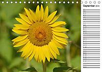 Ein Jahr lang Sonnenblumen (Tischkalender 2019 DIN A5 quer) - Produktdetailbild 9