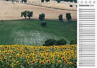 Ein Jahr lang Sonnenblumen (Tischkalender 2019 DIN A5 quer) - Produktdetailbild 12