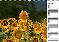 Ein Jahr lang Sonnenblumen (Wandkalender 2019 DIN A3 quer) - Produktdetailbild 5