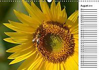 Ein Jahr lang Sonnenblumen (Wandkalender 2019 DIN A3 quer) - Produktdetailbild 6