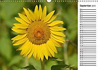 Ein Jahr lang Sonnenblumen (Wandkalender 2019 DIN A3 quer) - Produktdetailbild 10
