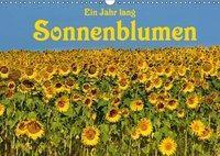 Ein Jahr lang Sonnenblumen (Wandkalender 2019 DIN A3 quer), Anke van Wyk - www.germanpix.net