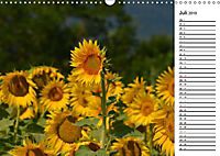Ein Jahr lang Sonnenblumen (Wandkalender 2019 DIN A3 quer) - Produktdetailbild 7