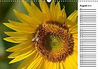 Ein Jahr lang Sonnenblumen (Wandkalender 2019 DIN A3 quer) - Produktdetailbild 8