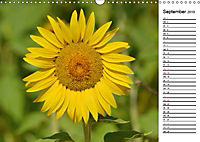 Ein Jahr lang Sonnenblumen (Wandkalender 2019 DIN A3 quer) - Produktdetailbild 9