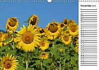 Ein Jahr lang Sonnenblumen (Wandkalender 2019 DIN A3 quer) - Produktdetailbild 11