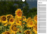 Ein Jahr lang Sonnenblumen (Wandkalender 2019 DIN A4 quer) - Produktdetailbild 7