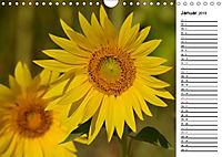 Ein Jahr lang Sonnenblumen (Wandkalender 2019 DIN A4 quer) - Produktdetailbild 1