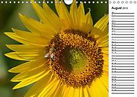 Ein Jahr lang Sonnenblumen (Wandkalender 2019 DIN A4 quer) - Produktdetailbild 8