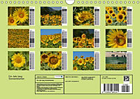 Ein Jahr lang Sonnenblumen (Wandkalender 2019 DIN A4 quer) - Produktdetailbild 13