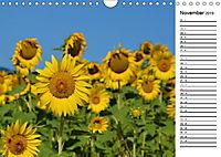 Ein Jahr lang Sonnenblumen (Wandkalender 2019 DIN A4 quer) - Produktdetailbild 11