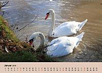 Ein Jahr mit der Abensberger Schwanenfamilie (Wandkalender 2019 DIN A2 quer) - Produktdetailbild 1