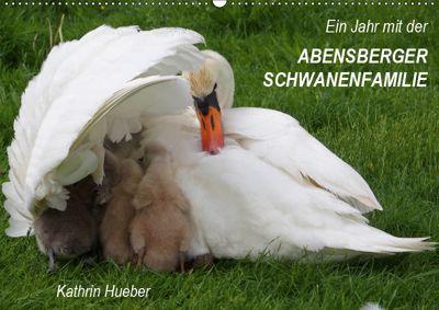 Ein Jahr mit der Abensberger Schwanenfamilie (Wandkalender 2019 DIN A2 quer), Kathrin Hueber