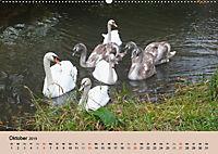 Ein Jahr mit der Abensberger Schwanenfamilie (Wandkalender 2019 DIN A2 quer) - Produktdetailbild 10