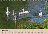 Ein Jahr mit der Abensberger Schwanenfamilie (Wandkalender 2019 DIN A2 quer) - Produktdetailbild 8