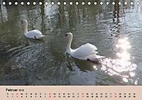 Ein Jahr mit der Abensberger Schwanenfamilie (Tischkalender 2019 DIN A5 quer) - Produktdetailbild 2