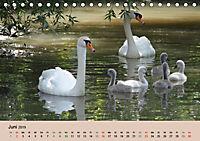 Ein Jahr mit der Abensberger Schwanenfamilie (Tischkalender 2019 DIN A5 quer) - Produktdetailbild 6
