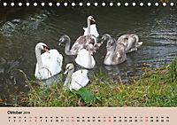 Ein Jahr mit der Abensberger Schwanenfamilie (Tischkalender 2019 DIN A5 quer) - Produktdetailbild 10