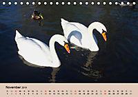 Ein Jahr mit der Abensberger Schwanenfamilie (Tischkalender 2019 DIN A5 quer) - Produktdetailbild 11