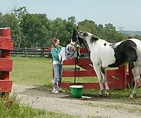 Ein Pferd für Moondance, DVD - Produktdetailbild 3