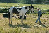 Ein Pferd für Moondance, DVD - Produktdetailbild 6