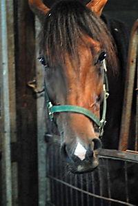 Ein Pferd fürs Leben - Produktdetailbild 2