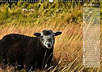 Ein Sommer auf Texel (Wandkalender 2019 DIN A3 quer) - Produktdetailbild 5