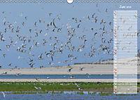 Ein Sommer auf Texel (Wandkalender 2019 DIN A3 quer) - Produktdetailbild 6