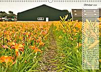 Ein Sommer auf Texel (Wandkalender 2019 DIN A3 quer) - Produktdetailbild 10