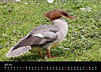 Einblicke in die Welt der Säger (Wandkalender 2019 DIN A4 quer) - Produktdetailbild 7